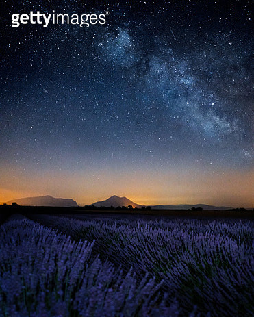 Scenic View Of Lavender Field Against Sky At Night - gettyimageskorea