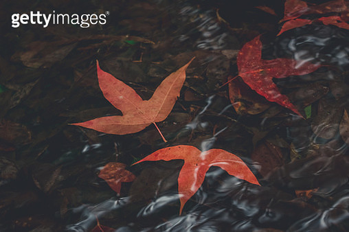 Close-Up Of Autumn Leaves On Field - gettyimageskorea
