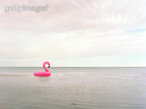 Flamingo ring by sea - gettyimageskorea