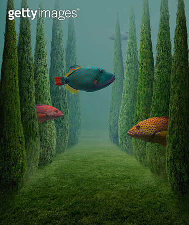 Big fishes - gettyimageskorea