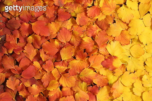 Fall colors - gettyimageskorea