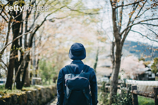 Rear view of young male backpacker enjoying a Spring day in the nature against beautiful cherry blossom - gettyimageskorea