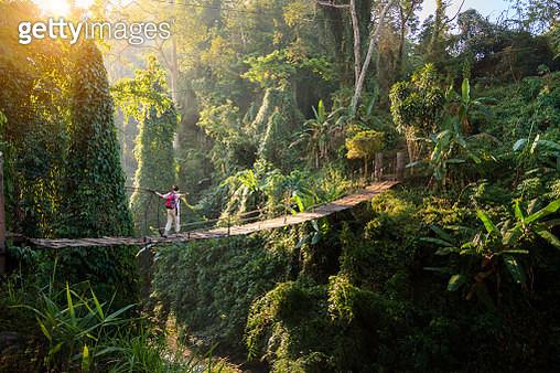 Backpacker on suspension bridge in rainforest - gettyimageskorea