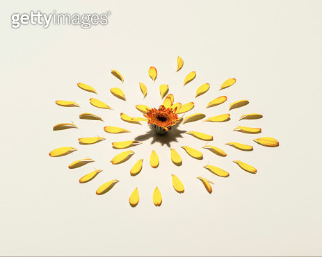 picked flower - gettyimageskorea