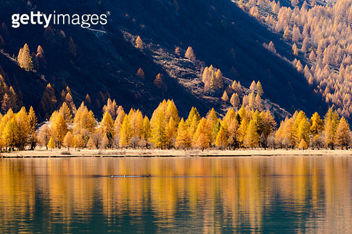 Scenic View Of Lake In Forest During Autumn - gettyimageskorea