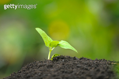 New Growth in Fresh Soil at a Community Garden - gettyimageskorea