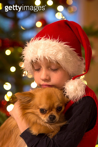 Boy Holding Chihuahua Puppy on Christmas - gettyimageskorea