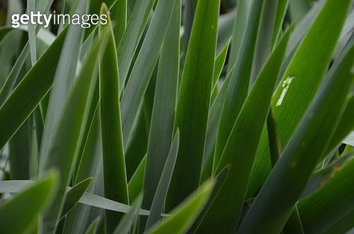 Full Frame Shot Of Palm Leaf - gettyimageskorea