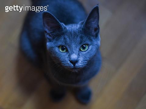 Close-Up Portrait Of Black Cat - gettyimageskorea