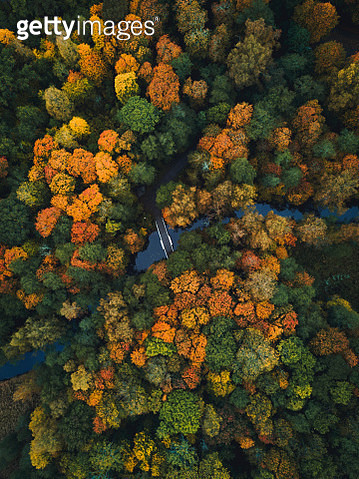 Aerial View Of Footbridge Over River In Forest During Autumn - gettyimageskorea