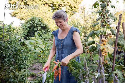 Mature woman gardening, digging up fresh carrots - gettyimageskorea