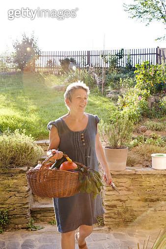 Mature woman gardening, walking with basket of fresh vegetables - gettyimageskorea