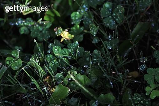 Full Frame Shot Of Wet Plants - gettyimageskorea