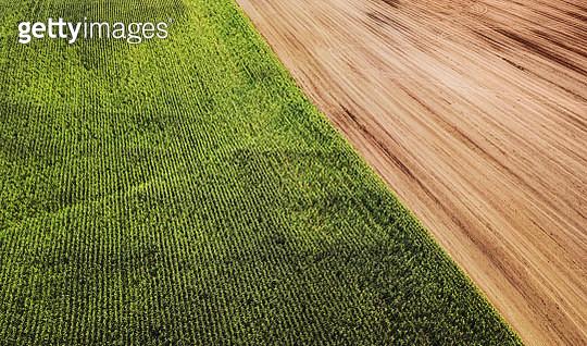 Aerial drone view of mature corn crop. - gettyimageskorea