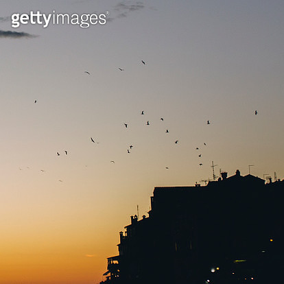 Sunset and birds - gettyimageskorea