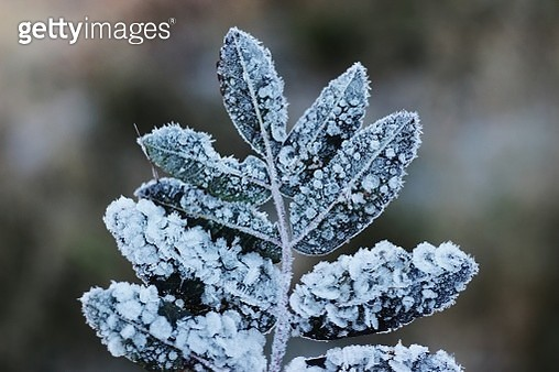 Close-Up Of Frozen Tree - gettyimageskorea