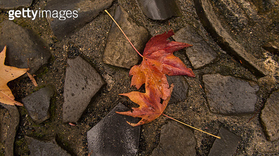 fallen leaves. - gettyimageskorea