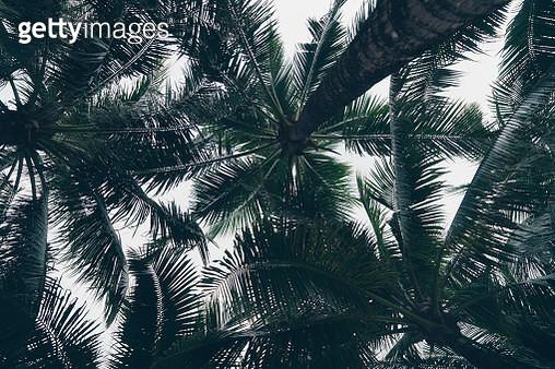 Thailand palms - gettyimageskorea