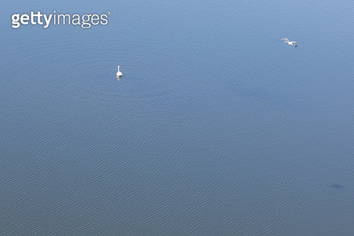 A minimal aerial image of water and birds in Cardiff Bay, Wales, UK. - gettyimageskorea