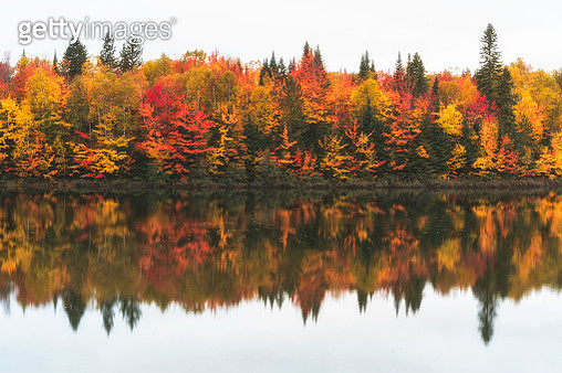 Colorful trees behind lake. In the autumn, the leaves on maple trees turn into red and very beautiful. There is also reflection on the water. A typical Canadian autumn scene. - gettyimageskorea