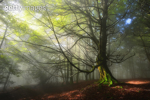 Lights of the forest - gettyimageskorea