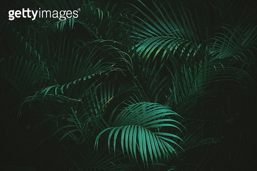 Close-Up Of Palm Tree - gettyimageskorea