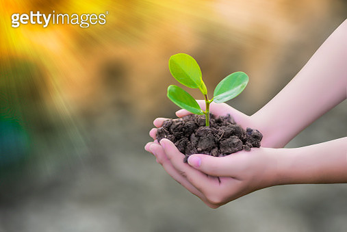 Cropped Image Of Woman Holding Sapling - gettyimageskorea