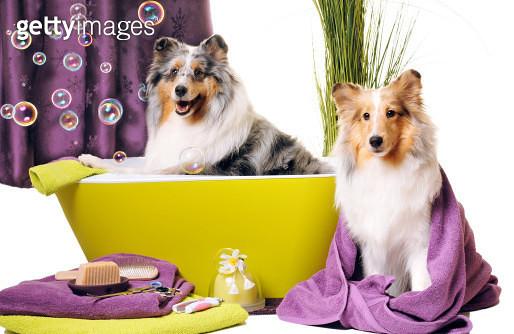 Dog grooming - gettyimageskorea