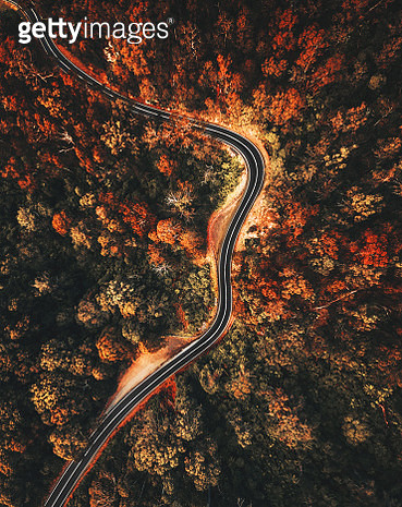 autumn forest aerial view in australia - gettyimageskorea