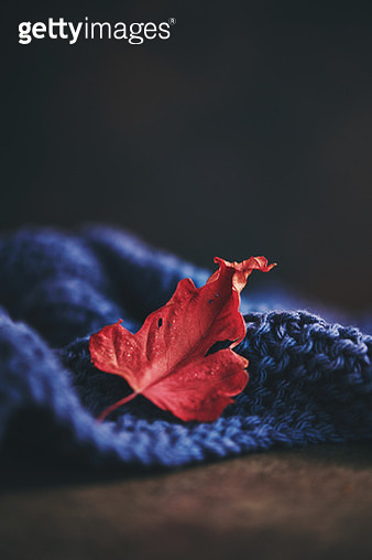 Fall background with leaf and knitted blanket - gettyimageskorea