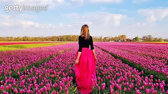 Rear View Of Woman Standing Amidst Pink Tulips At Farm - gettyimageskorea