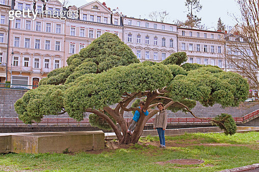 Girls or tree climbing on the shore Tepla River embankment, Karlovy Vary, Czech republic - gettyimageskorea