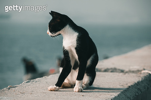 Full Length Of A Cat Looking Away - gettyimageskorea