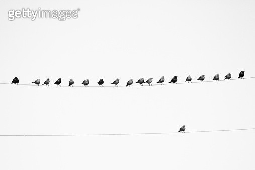 Birds on a wire and one all alone - gettyimageskorea
