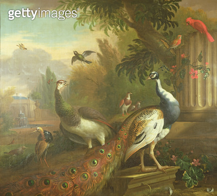 Peacock and Peahen with a Red Cardinal in a Classical Landscape - gettyimageskorea