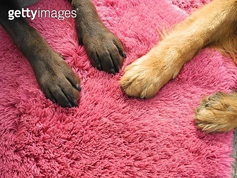 Close-Up Of Dog Paw - gettyimageskorea