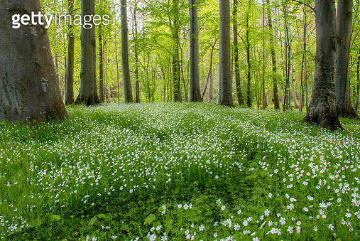 The Forest Floor - gettyimageskorea