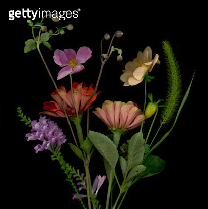 Flower Arrangement with Zinnias - gettyimageskorea