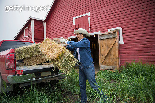 Rancher loading hay bale onto truck bed - gettyimageskorea
