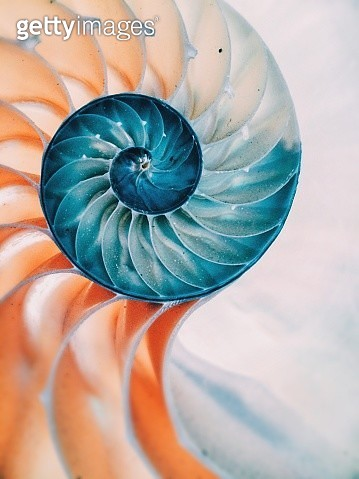 Close-Up Of Nautilus Shell - gettyimageskorea
