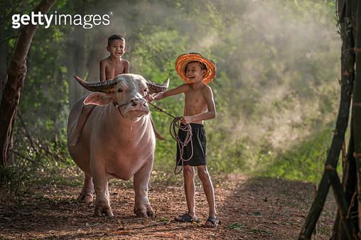 Unseen buffalo (small) - gettyimageskorea
