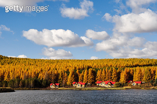 Bashang autumn of Hebei Province in China - gettyimageskorea