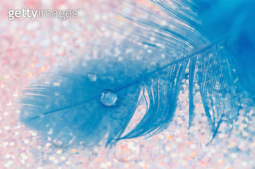 Macro blue feather with drop water in closeup, fine art, selective focus. - gettyimageskorea