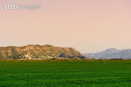Rice Fields... - gettyimageskorea