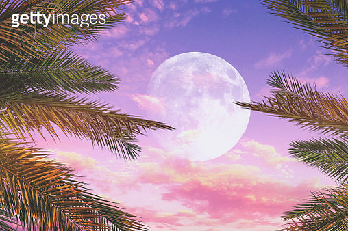 Stunning sunset sky with full moon and palm trees. - gettyimageskorea