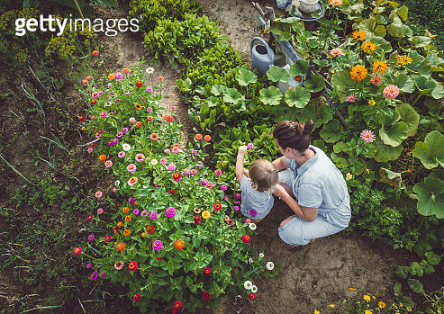 Woman With Son in a Home Grown Garden - gettyimageskorea