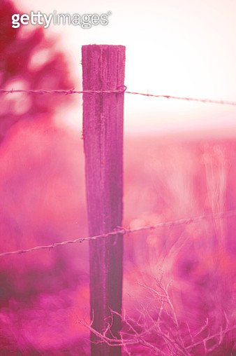 Fence post, pink color - gettyimageskorea