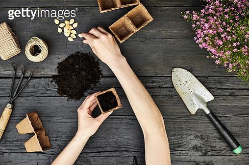Womans hands planting - gettyimageskorea