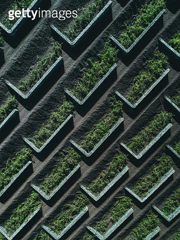 Landscaped garden taken from above, Lanzarote - gettyimageskorea