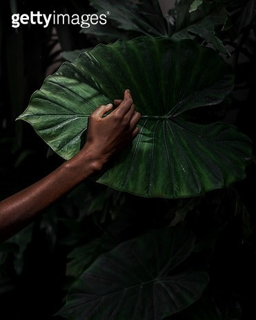 Cropped Hand Of Person Touching Monstera Leaf In Forest - gettyimageskorea